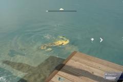 Il fascino oscuro della pesca - Final Fantasy XV