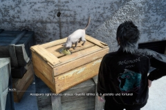Un gatto da deliziare - Missione - Final Fantasy XV