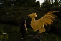 Missione - Un Chocobo da soccorrere - Final Fantasy XV